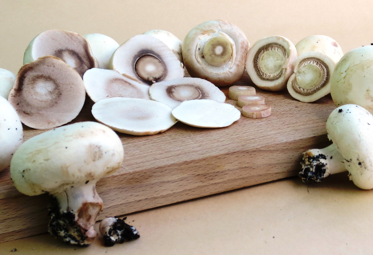 budidaya jamur kancing