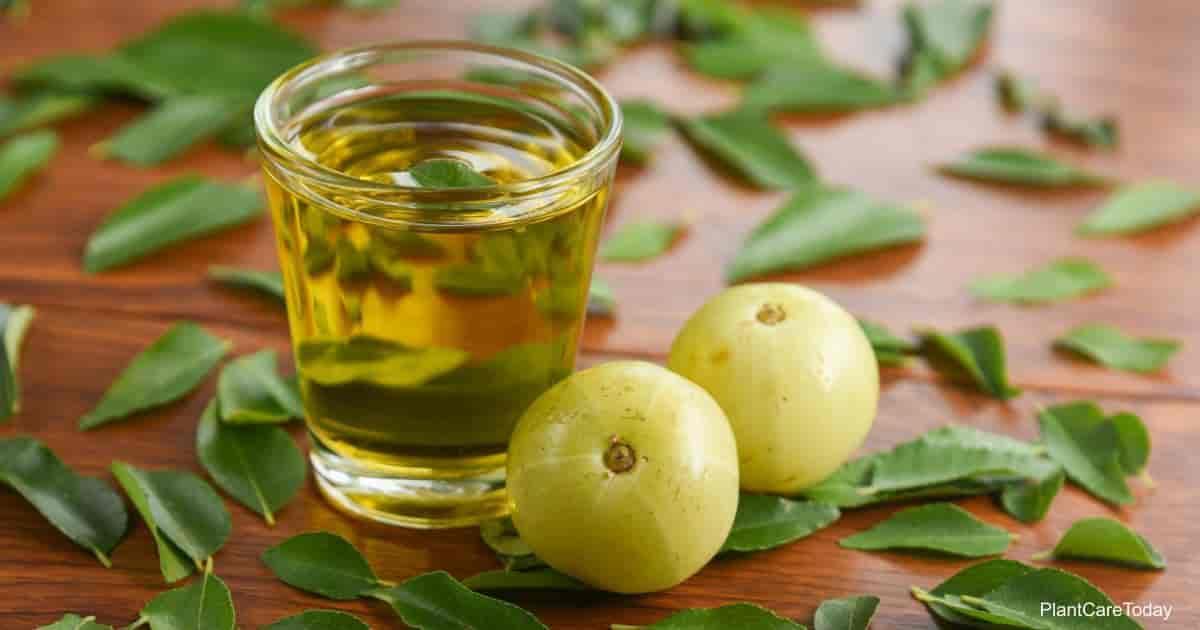 manfaat neem oil untuk tanaman