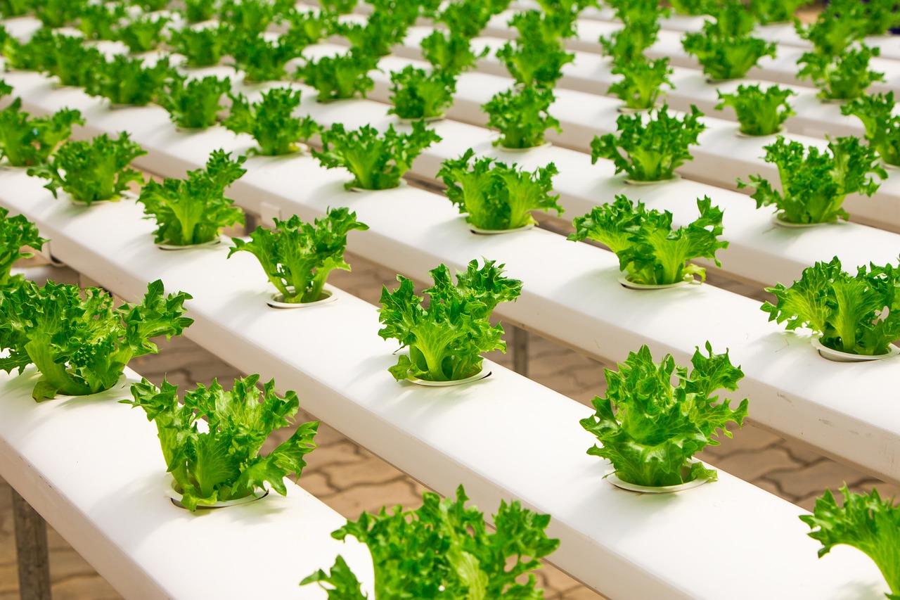 metode tanaman hidroponik