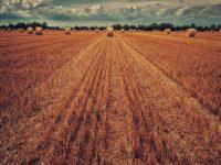 manfaat jerami padi untuk tanaman