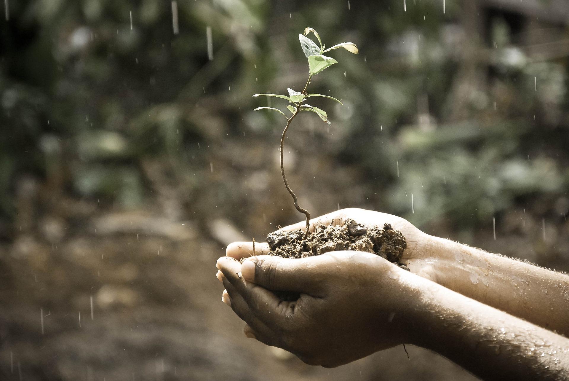 cara menetralkan ph tanah secara alami