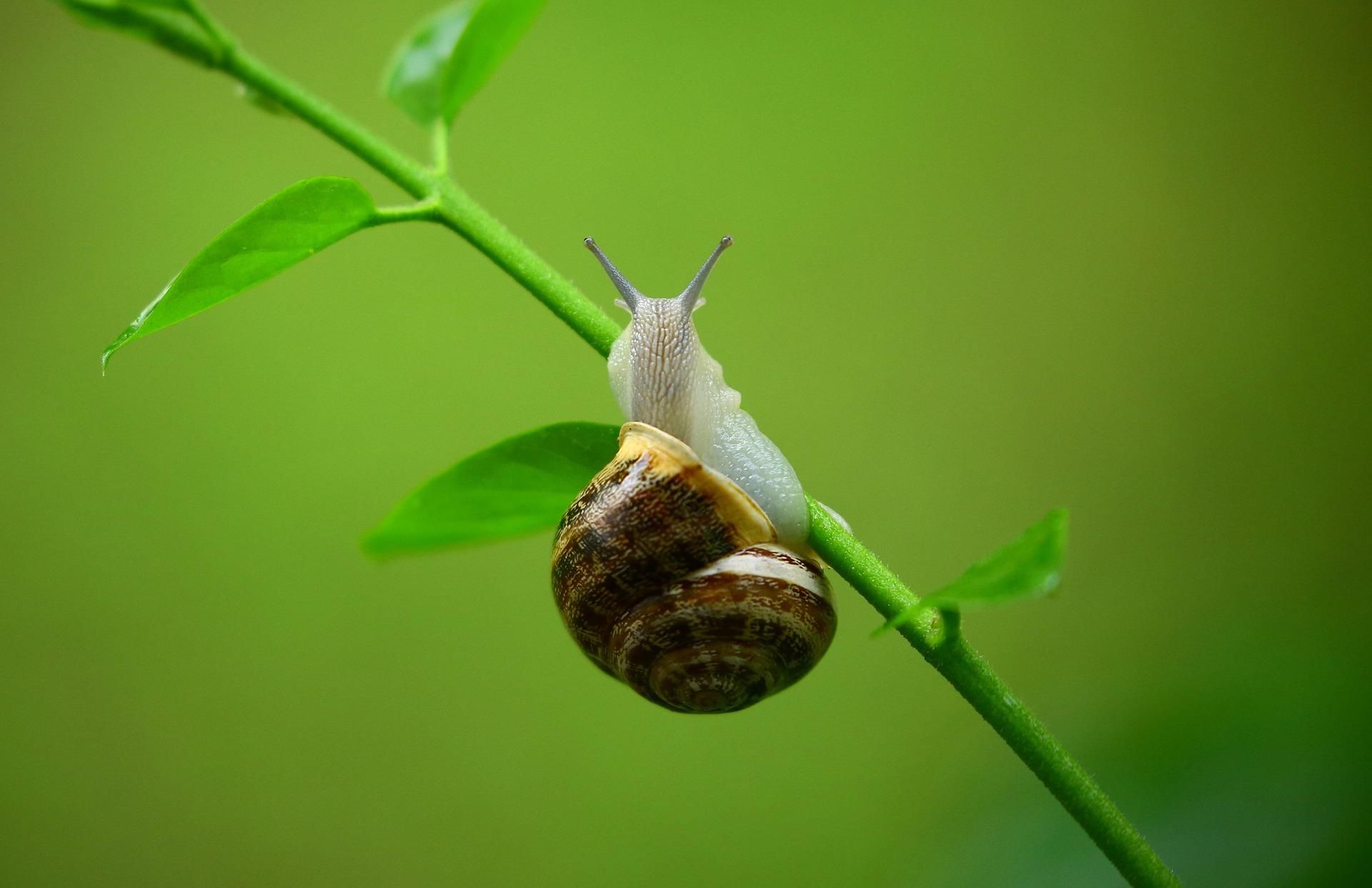 membasmi siput kecil pada tanaman